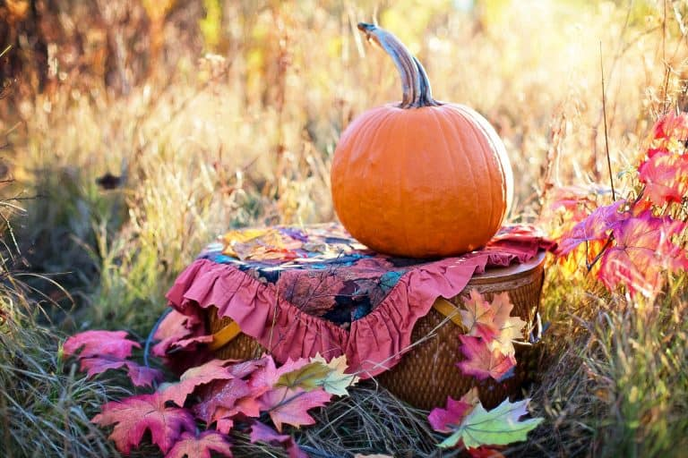 Pregnant in fall? An autumn pregnancy is so much fun! From fall pregnancy announcements to fall maternity outfits, these ideas will have you cozy all season... #fallpregnancy #fall #autumn #pregnant #pregnancy #newmom #newborn #baby